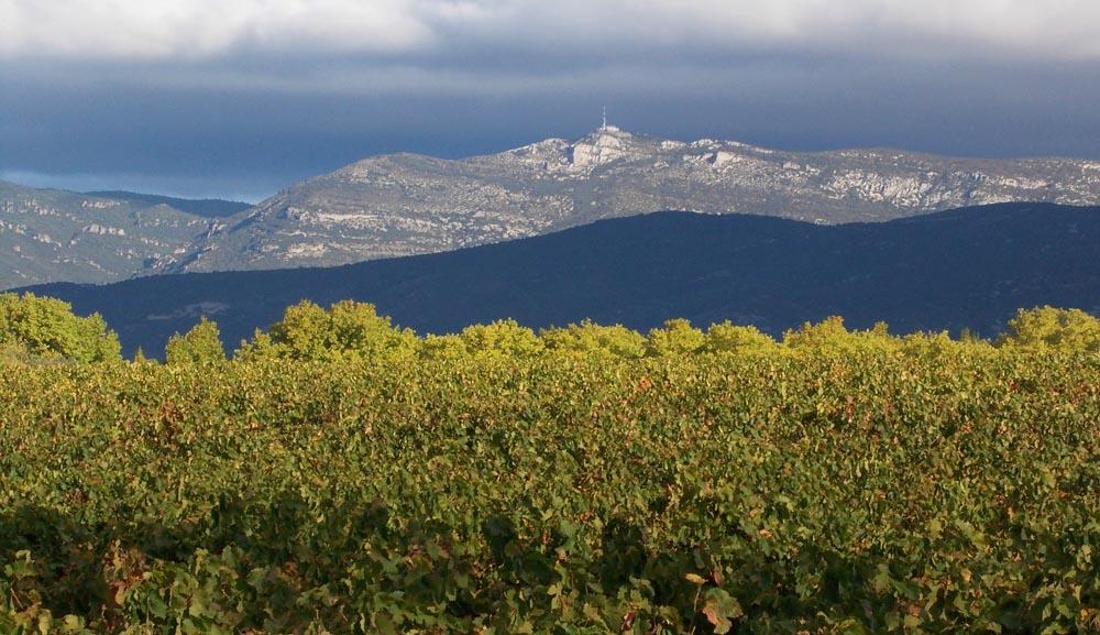 Vignes du Domaine de Rieussec, la vue sur le Mont Saint-Baudille