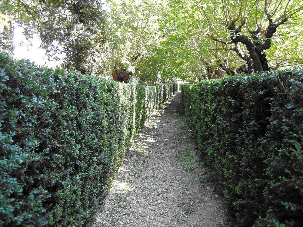 Allée de buis - jardins du Domaine de Rieussec - Gignac 34